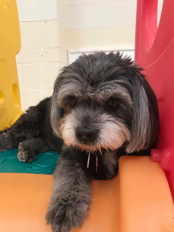 Small Dog Boarding in Appleton, WIsconsin