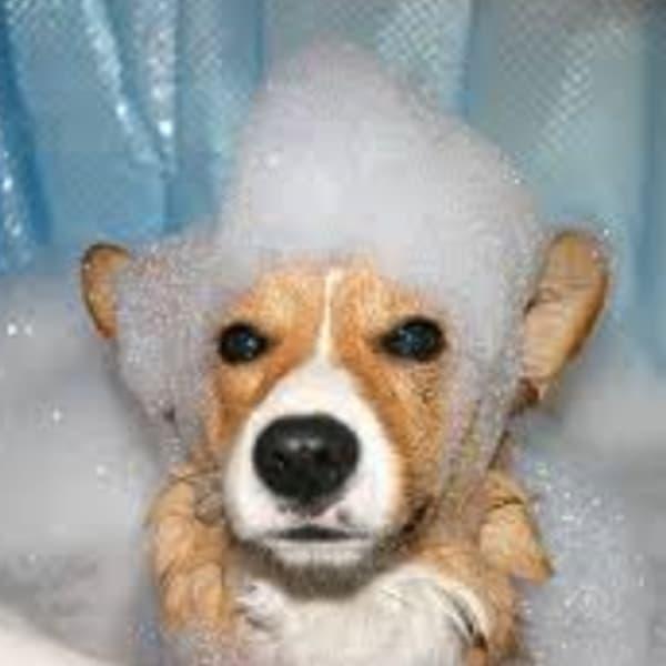 Fox Cities DIY Dog Baths