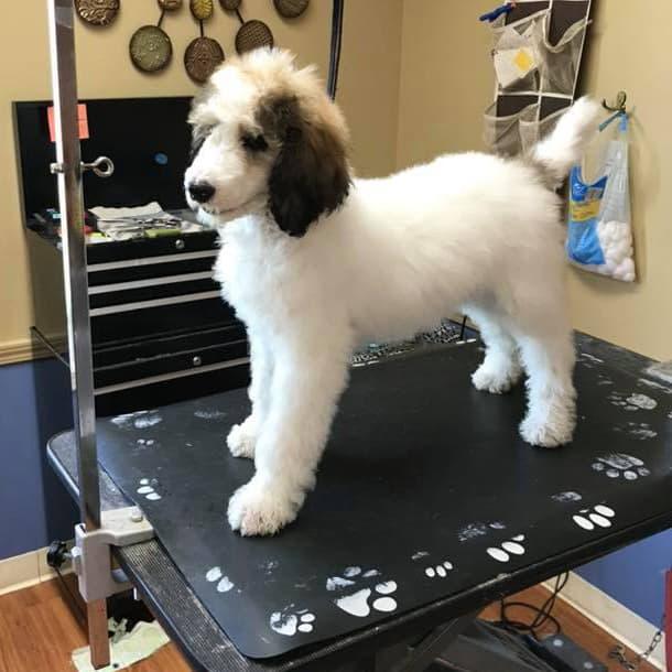 Appleton, Wisconsin Dog Grooming