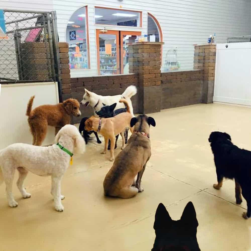 Appleton Dog Kennels